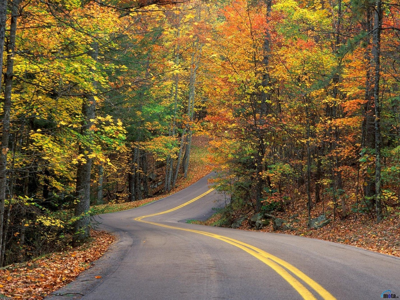 y_Autumn_Road_Forest_2560x1920-vi.jpg